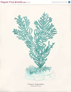 Antique Coral Art Print  8x10  Gorgonia Teal by 1001treasures, $14.00