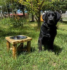 Raised log dog feeder pet feeder dog bowl stand dog feeding | Etsy Twig Furniture, Best Outdoor Furniture, Furniture Stores, Elevated Dog Feeder, Dog Feeding Station, Dog Bowl Stand, Getaway Cabins, Pet Feeder, High Quality Furniture