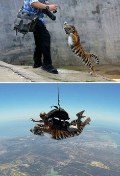 Featured with Photoshop Battle Pics – Funnyfoto - Page 76 Funny Photoshop, Photoshop Actions, Photoshop For Photographers, Photoshop Photography, Yandere Simulator Memes, Donald Trump, Before And After Pictures, Cool Pets, Life Humor