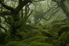 Wistman's Wood,Devon,England