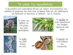 sofiaadamoubooks: Μαθαίνω για την αμυγδαλιά Tree Forest, Plants, Spring, Activities, Winter, Summer, Winter Time, Summer Time, Plant
