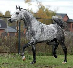 815 Best Great Horses 111 Images In 2019 Horses