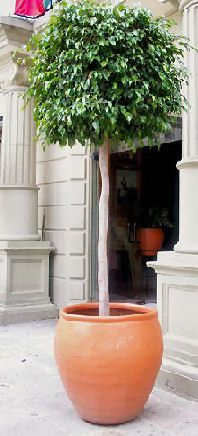 Bon Trees In Container Gardens Potted Trees Patio, Outdoor Planters, Outdoor  Patios, Garden Planters