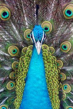 Animals iPhone Wallpaper | iDesign * iPhone