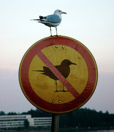 Seagull on a sign!