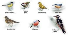 Během zimy potkáme v krmítkách mnoho hladových ptáčků. Elementary Science, Games For Kids, Bird Feeders, Parks, Children, Winter, Animals, Biology, Woodland Forest