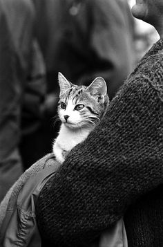 Protest cat: Boston common, Boston, October 1970  Cat in the crowd, Vietnam anti-war demonstration    Part of an archival project, featuring the photographs of Nick Dewolf