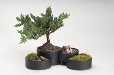 Bonsai Pot on Industrial Design Served