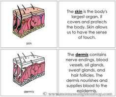 Skin Nomenclature Book: Illustrates and describes 11 Parts of the skin.