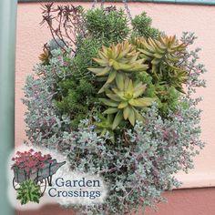 Cool Succulent planter basket