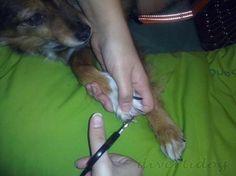 Cómo cortar las uñas a tu perro correctamente | Cuidar de tu perro es facilisimo.com