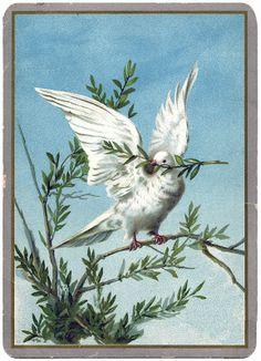 Vintage Christmas Clip Art – Extraordinary White Dove