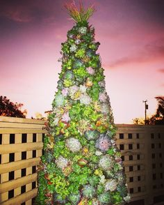 Not the best picture but the first and ONLY 6' Succulent Christmas tree that I will ever do so take it in.... #lovehate #christmastree #succulent #made #madewithlove #holiday #succulents #oc #orangecounty #lagunabeach #costamesa #pic #photo #picoftheday #photography #photooftheday #huntcollective