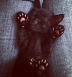 Talk to the paws - Little Black Kitty. All those extra toes!!! I just want to kiss them!