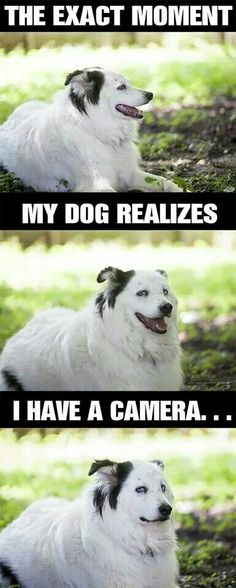 My dog will either do this or look away when she sees my camera
