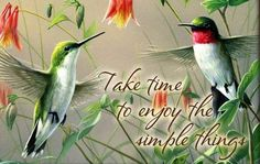 29 Ideas humming bird quotes pictures for 2019 Hummingbird Quotes, Hummingbird Symbolism, Hummingbird Pictures, Hummingbird Plants, Red Bird Tattoos, Cage Tattoos, Tatoos, Bird Painting Acrylic, Humming Bird Feeders