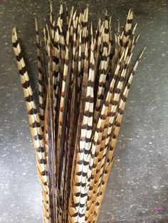 """30 - 35"""" Reeves Pheasant Feather- Per Piece"""