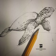 20170130 Turtle Sketch Psdelux by psdeluxe - / png elements psd aesthetic brown psd aesthetic dark psd aesthetic red psd flyer templates psd templates psd templates photoshop Cool Sketches, Art Drawings Sketches, Animal Sketches, Animal Drawings, Turtle Sketch, Lion Sketch, Frog Illustration, Sea Turtle Art, Drawing Reference Poses