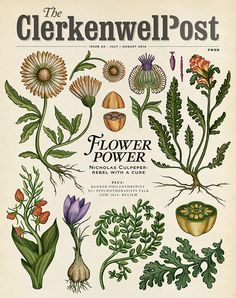 The Botanical Drawings of Katie Scott – Trendland Online Magazine Curating the Web since 2006 Illustration Inspiration, Nature Illustration, Botanical Illustration, Botanical Drawings, Botanical Prints, Biology Drawing, Biology Art, Vintage Posters, Vintage Art