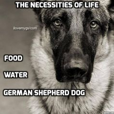 The necessities of life which are oh so true: food, water, German Shepherd Dog