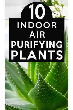 Clean your air with plants! Check out these great ideas