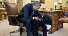 President Obama spends some quality time with the family dog Bo in the Oval Office.