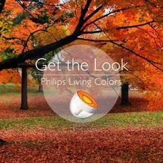 Recreate beauty indoors with Philips Living Colors. 16 million colors of fully dimmable and adjustable LED light, right at your fingertips. Learn more at http://www.usa.philips.com/c/choose-your-luminaire/livingcolors-clear-691436048/prd/en/  #autumn #leaves #color #orange #foliage
