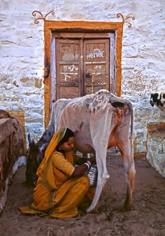 India - Milk for Rice Krispies India Destinations, Mother India, Bible Images, Amazing India, Rural India, Indian Colours, India Culture, History Of India, Indian People