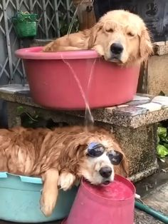 Cute Funny Animals, Cute Baby Animals, Funny Dogs, Animals And Pets, Cute Creatures, Beautiful Creatures, Animals Beautiful, Cute Animal Videos, Funny Animal Pictures