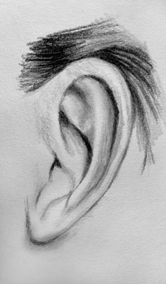 Ear - Ohr (Sketch)