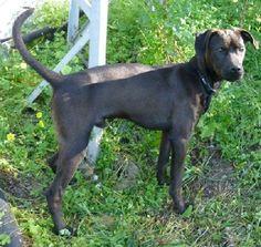 ACE Animal Care España - De refugio bezoeken Animal Care, Doge, Pet Care, Animals, Shelters, Animaux, Animal, Animales, Animais