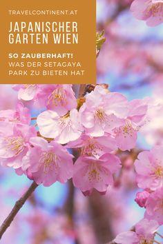 Es ist ein Geheimtipp für #Wien: der Setagaya #Park ist ein Japanischer #Garten. So kannst du in den Zauber von #Japan eintauchen. #gartenkulturen #gartenreisen Vienna, Park, Plants, Travel, Destinations, Repurpose, Viajes, Parks, Plant