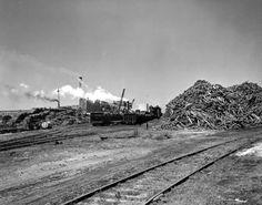 Unloading pulpwood at the Port St. Joe paper mill.