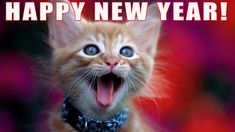 Happy New Year & The year ahead! check this fantastic photo from Katzenworld