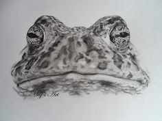 Toad+by+stardust12345.deviantart.com+on+@DeviantArt