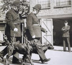 The Metropolitan Police's first ever police dogs taken for a walk in 1938. They were unfortunately called 'Nigger' and 'Tint'.
