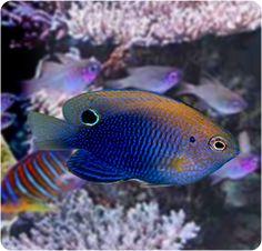 74 best marine fish tank images on pinterest in 2018 marine life