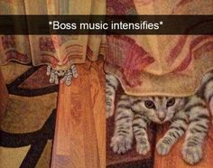 Cats are weird. That is all – 25 Funny Cats Photo : Cats are weird. That is all – 25 Funny Cats Photo Cats weird. Funny Photo Memes, Funny Cat Photos, Funny Animal Pictures, Cool Pictures, Funny Memes, Cute Cats, Funny Cats, Funny Animals, Cute Animals
