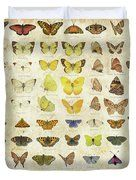 Bed covers, bed,duvet, cover,butterflies,butterfly,types,identification,families,species,classes,