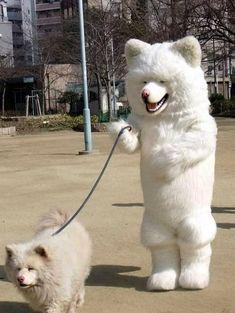 犬のきぐるみを着て犬を散歩すると犬の方が飼い主ぽい事が判明