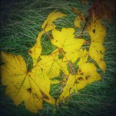 Herfst  op komst