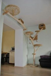 How to get  (& or make) the right cat tree for you & your furbaby(s) Cats, just a sideways step from the wild.