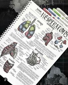 Science Notes Studyblr 26 Ideas For 2019 Nursing School Notes, College Notes, Cute Notes, Pretty Notes, Medicine Notes, Science Notes, Study Organization, Bullet Journal Notes, School Study Tips