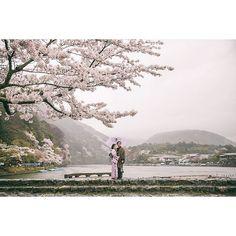 【shinji_morita_photography】さんのInstagramをピンしています。 《Sakura #prewedding #japan #tokyo #engagement_photo #spring #love #cherry_blossom #sakura #公園 #日本 #東京 #プレ花嫁 #結婚準備 #ウェディングフォト #フォトウェディング #ブライダル #ウェディングフォトグラファー #写真好 #写真好きな人と繋がりたい #エンゲージメントフォト#ロケフォト#桜 #shinjimorita》