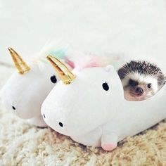 WEBSTA @ mr.pokee - can you believe it's international unicorn day #unicorn