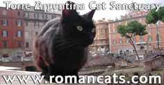 Visit our official website at www.romancats.com