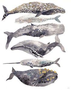 whale whale whale