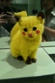 Pikachu cat it looks so sad but its so dang cute