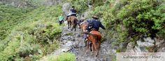 Colca Canyon Trek - Sangalle hike to Cabnaconde...just legendary!!! http://www.peruinsideout.com/wp/next-tours/trekking-tours-peru/colca-canyon-trek/