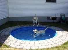 Dog Pond - Place a plastic kiddie pool in the ground. It'd be easy to clean and looks nicer than having it above ground. Big dogs can't chew it up or drag it around. Not into it being a dog pond but would be cute for a kiddie pool or pond :) Outdoor Projects, Home Projects, Backyard Projects, Craft Projects, Diy Pet, Dog Pond, Kiddie Pool, Diy Swimming Pool, Outdoor Fun
